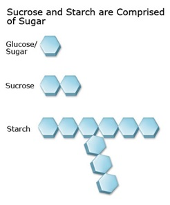 Sucrose and starch are comprised of sugars